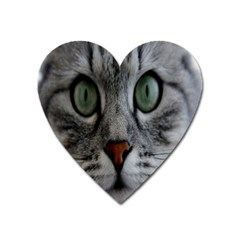 Cat Face Eyes Gray Fluffy Cute Animals Heart Magnet by Mariart