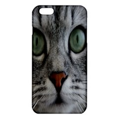 Cat Face Eyes Gray Fluffy Cute Animals Iphone 6 Plus/6s Plus Tpu Case by Mariart