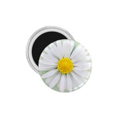 Art Daisy Flower Art Flower Deco 1 75  Magnets by Nexatart