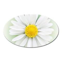 Art Daisy Flower Art Flower Deco Oval Magnet