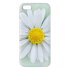 Art Daisy Flower Art Flower Deco Apple Iphone 5 Premium Hardshell Case by Nexatart