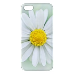 Art Daisy Flower Art Flower Deco Iphone 5s/ Se Premium Hardshell Case by Nexatart