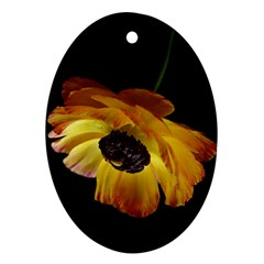 Ranunculus Yellow Orange Blossom Oval Ornament (two Sides) by Nexatart