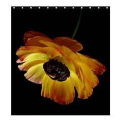 Ranunculus Yellow Orange Blossom Shower Curtain 66  X 72  (large)
