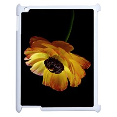 Ranunculus Yellow Orange Blossom Apple Ipad 2 Case (white) by Nexatart