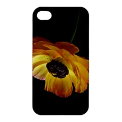 Ranunculus Yellow Orange Blossom Apple Iphone 4/4s Premium Hardshell Case by Nexatart