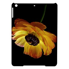 Ranunculus Yellow Orange Blossom Ipad Air Hardshell Cases by Nexatart