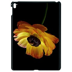 Ranunculus Yellow Orange Blossom Apple Ipad Pro 9 7   Black Seamless Case by Nexatart