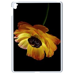 Ranunculus Yellow Orange Blossom Apple Ipad Pro 9 7   White Seamless Case by Nexatart