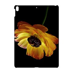 Ranunculus Yellow Orange Blossom Apple Ipad Pro 10 5   Hardshell Case by Nexatart
