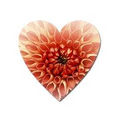 Dahlia Flower Joy Nature Luck Heart Magnet by Nexatart
