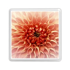 Dahlia Flower Joy Nature Luck Memory Card Reader (square)  by Nexatart