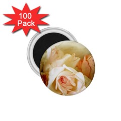 Roses Vintage Playful Romantic 1 75  Magnets (100 Pack)