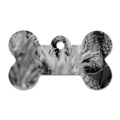 Pineapple Market Fruit Food Fresh Dog Tag Bone (two Sides) by Nexatart