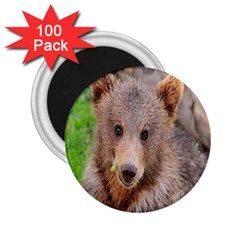 Baby Bear Animals 2 25  Magnets (100 Pack)  by Mariart