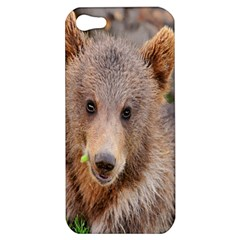 Baby Bear Animals Apple Iphone 5 Hardshell Case by Mariart