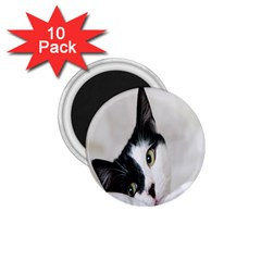 Cat Face Cute Black White Animals 1 75  Magnets (10 Pack)  by Mariart