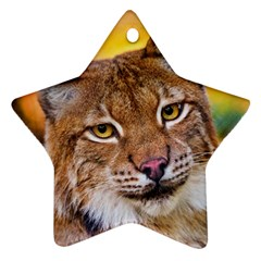 Tiger Beetle Lion Tiger Animals Ornament (star) by Mariart