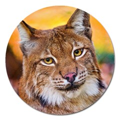 Tiger Beetle Lion Tiger Animals Magnet 5  (round) by Mariart