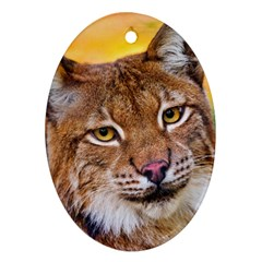 Tiger Beetle Lion Tiger Animals Oval Ornament (two Sides) by Mariart