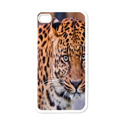 Tiger Beetle Lion Tiger Animals Leopard Apple Iphone 4 Case (white) by Mariart