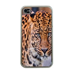 Tiger Beetle Lion Tiger Animals Leopard Apple Iphone 4 Case (clear) by Mariart