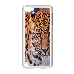 Tiger Beetle Lion Tiger Animals Leopard Apple Ipod Touch 5 Case (white) by Mariart