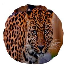 Tiger Beetle Lion Tiger Animals Leopard Large 18  Premium Flano Round Cushions