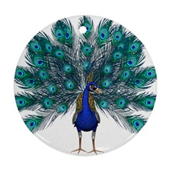 Peacock Bird Peacock Feathers Ornament (round) by Onesevenart