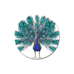 Peacock Bird Peacock Feathers Magnet 3  (round) by Onesevenart