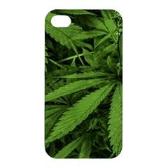 Marijuana Plants Pattern Apple Iphone 4/4s Premium Hardshell Case by dflcprints