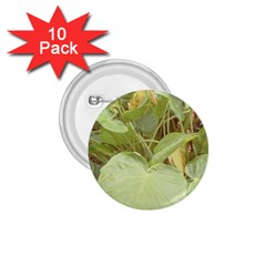 Img 20171006 235641 Img 20170911 101344 1 75  Buttons (10 Pack) by Nsglobal