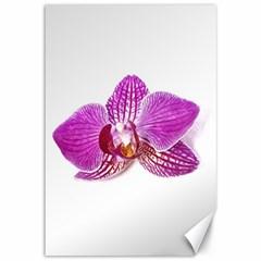 Lilac Phalaenopsis Aquarel  Watercolor Art Painting Canvas 12  X 18   by picsaspassion