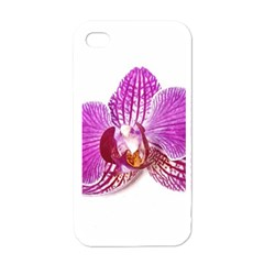 Lilac Phalaenopsis Aquarel  Watercolor Art Painting Apple Iphone 4 Case (white) by picsaspassion