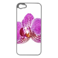 Lilac Phalaenopsis Aquarel  Watercolor Art Painting Apple Iphone 5 Case (silver) by picsaspassion