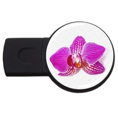 Lilac Phalaenopsis Flower, Floral Oil Painting Art Usb Flash Drive Round (4 Gb) by picsaspassion