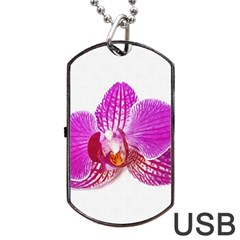 Lilac Phalaenopsis Flower, Floral Oil Painting Art Dog Tag Usb Flash (one Side) by picsaspassion