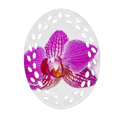 Lilac Phalaenopsis Flower, Floral Oil Painting Art Ornament (oval Filigree) by picsaspassion