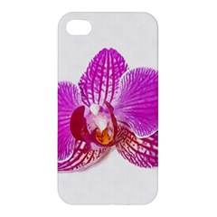 Lilac Phalaenopsis Flower, Floral Oil Painting Art Apple Iphone 4/4s Hardshell Case by picsaspassion