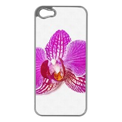Lilac Phalaenopsis Flower, Floral Oil Painting Art Apple Iphone 5 Case (silver) by picsaspassion
