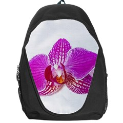 Lilac Phalaenopsis Flower, Floral Oil Painting Art Backpack Bag by picsaspassion