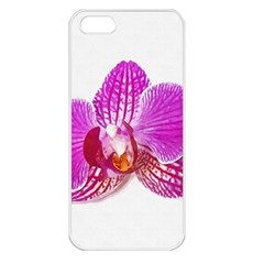 Lilac Phalaenopsis Flower, Floral Oil Painting Art Apple Iphone 5 Seamless Case (white) by picsaspassion