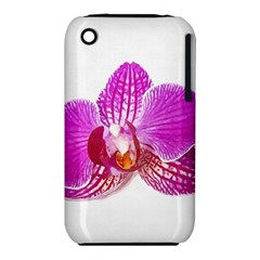 Lilac Phalaenopsis Flower, Floral Oil Painting Art Iphone 3s/3gs by picsaspassion