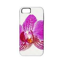 Lilac Phalaenopsis Flower, Floral Oil Painting Art Apple Iphone 5 Classic Hardshell Case (pc+silicone) by picsaspassion
