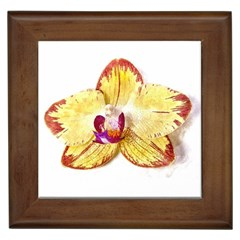 Yellow Phalaenopsis Flower, Floral Aquarel Watercolor Painting Art Framed Tiles by picsaspassion