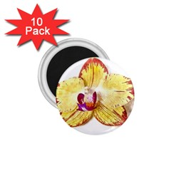 Yellow Phalaenopsis Flower, Floral Aquarel Watercolor Painting Art 1 75  Magnets (10 Pack)