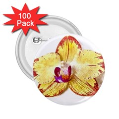 Yellow Phalaenopsis Flower, Floral Aquarel Watercolor Painting Art 2 25  Buttons (100 Pack)  by picsaspassion