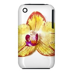 Yellow Phalaenopsis Flower, Floral Aquarel Watercolor Painting Art Iphone 3s/3gs by picsaspassion