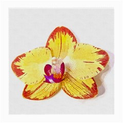 Phalaenopsis Yellow Flower, Floral Oil Painting Art Medium Glasses Cloth (2 Side) by picsaspassion