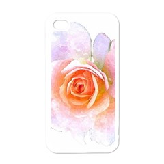 Pink Rose Flower, Floral Watercolor Aquarel Painting Art Apple Iphone 4 Case (white) by picsaspassion